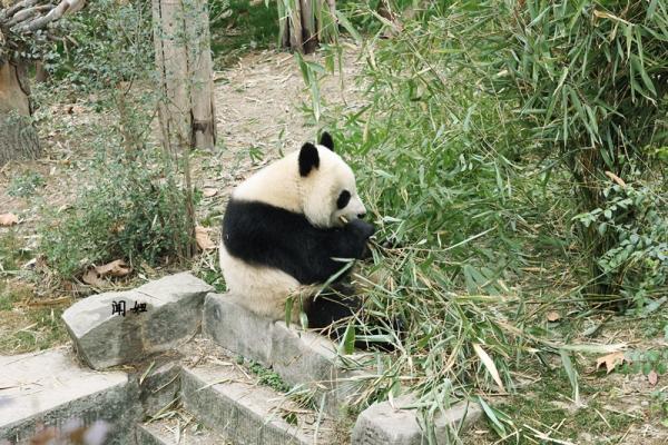 【以色诱人】78闻妞78我是大熊猫,我为自己代言