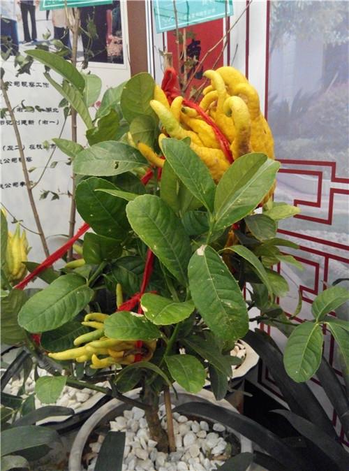分享 多种植物盆栽,花卉,艺术品等等还有以前都没见过的