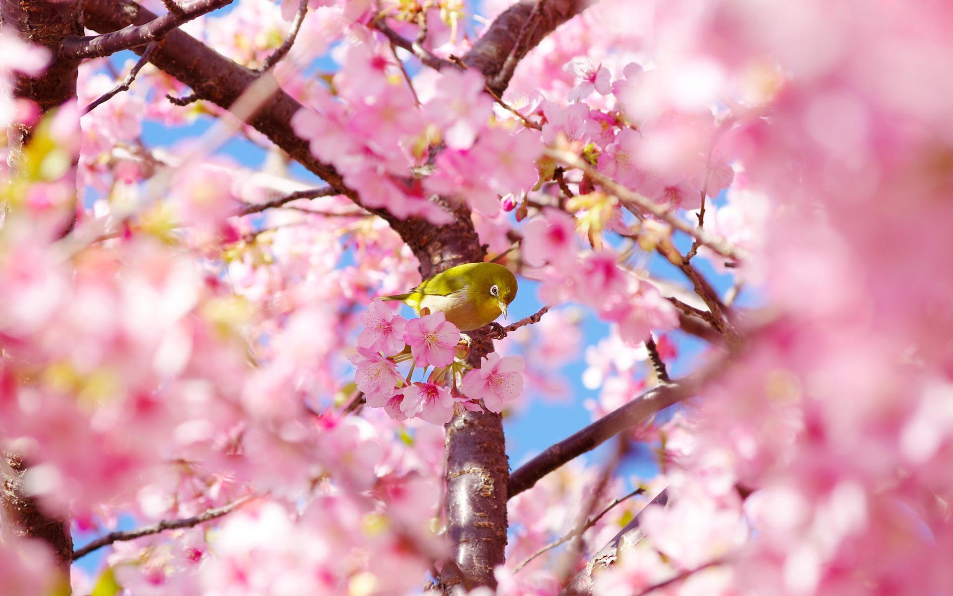 女生头像梦幻粉色樱花
