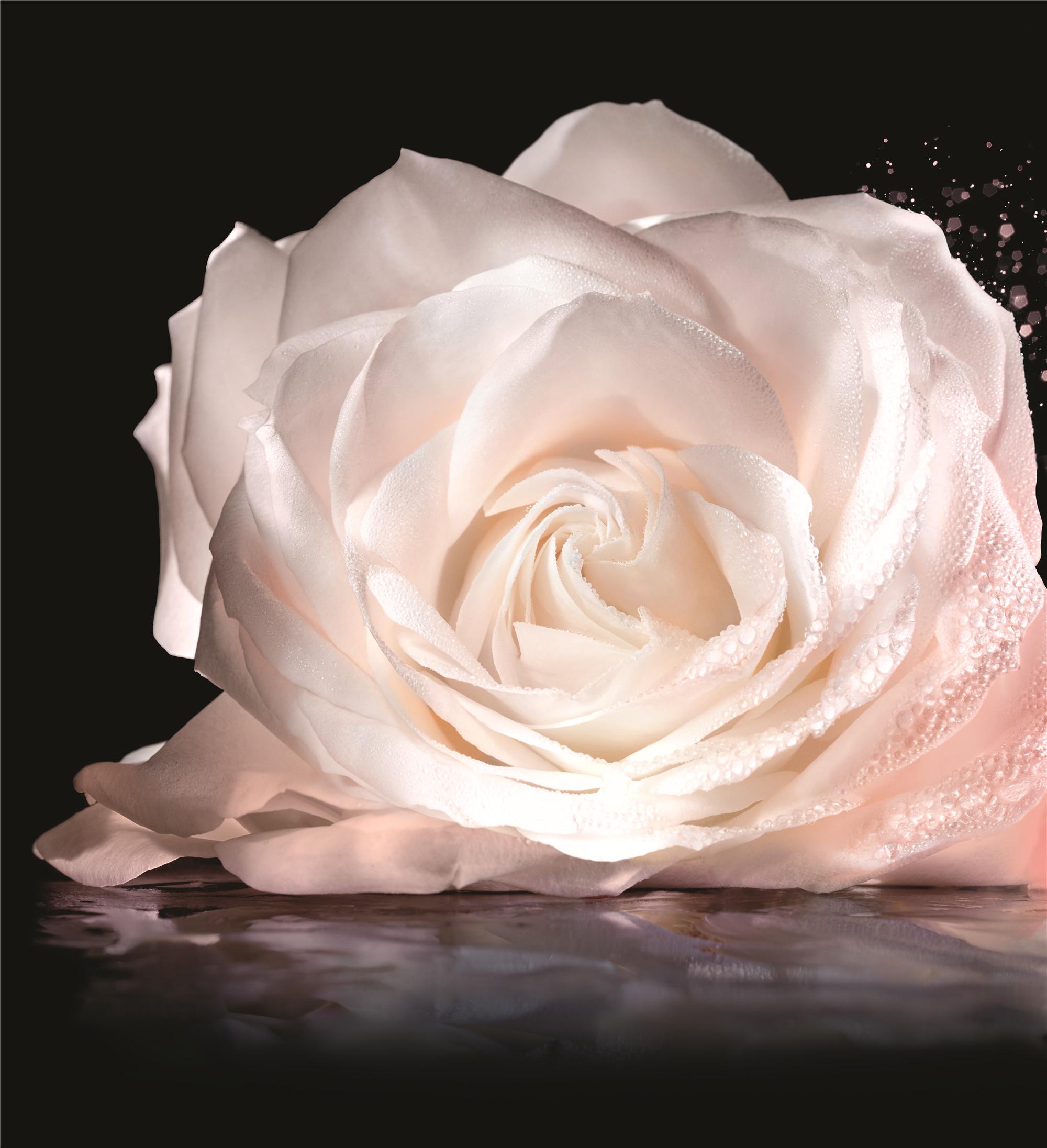 S342_PrestigeHuile_18_03_Main_Rose_Crop_F39.jpg