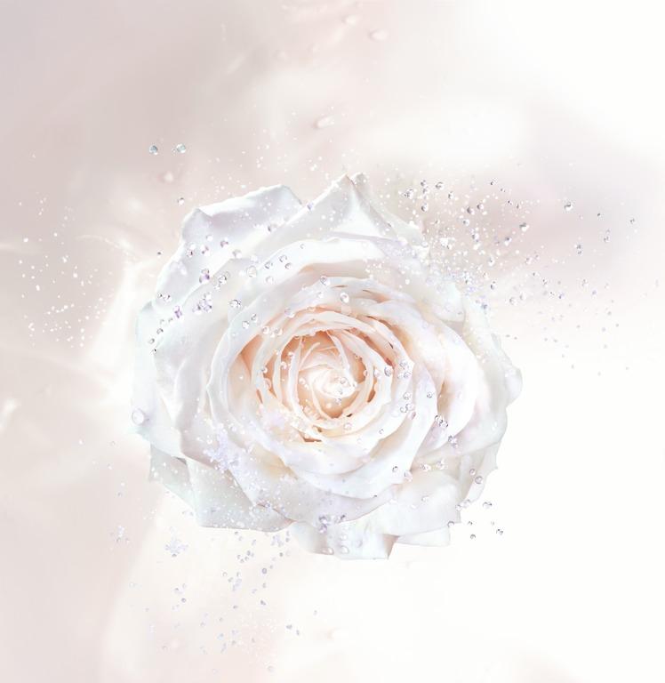 S366 PRESTIGE Demaqs 18 P03F Rose Solo_ANA_F39.jpg