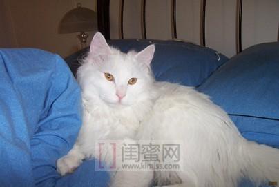 人说猫一样                    秘,可爱,小慵懒,静谧又敏感的性